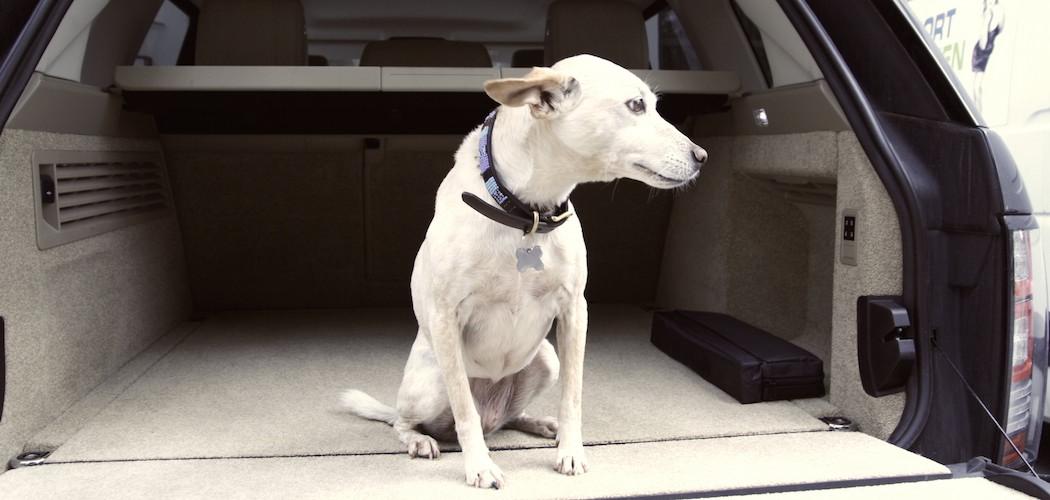 Hund Kofferraum Range Rover