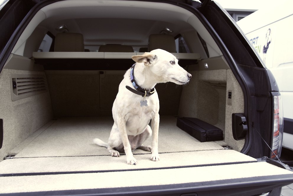 Hund glücklich Kofferraum Range Rover