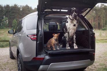 Land Rover Hunde Transportsystem 2018